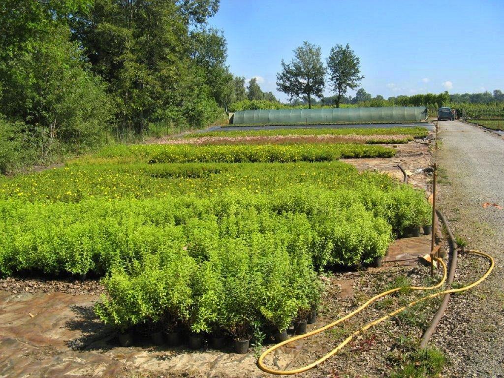 Trigala Armin Trimpe - Gartencenter - Pflanzen - Bodendecker - verschiedene Bodendecker